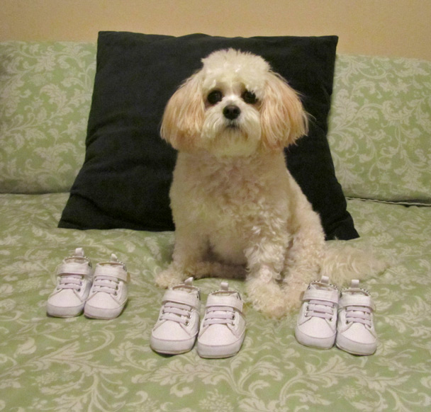 dog with baby shoes