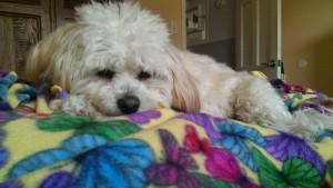 Hope napping