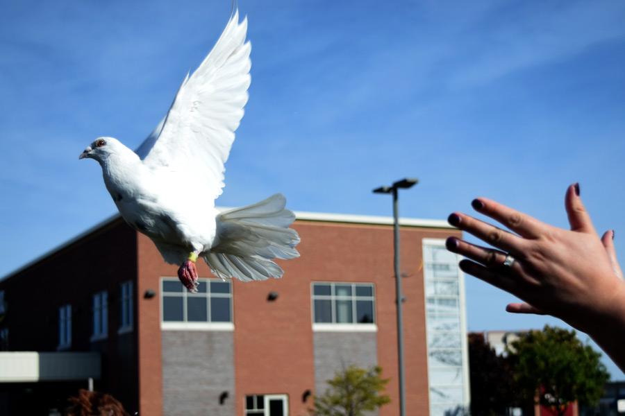 DSC_4416-dove-release